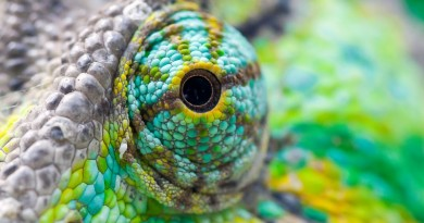 Lessons Startup Can Learn From a Chameleon-MashupCorner