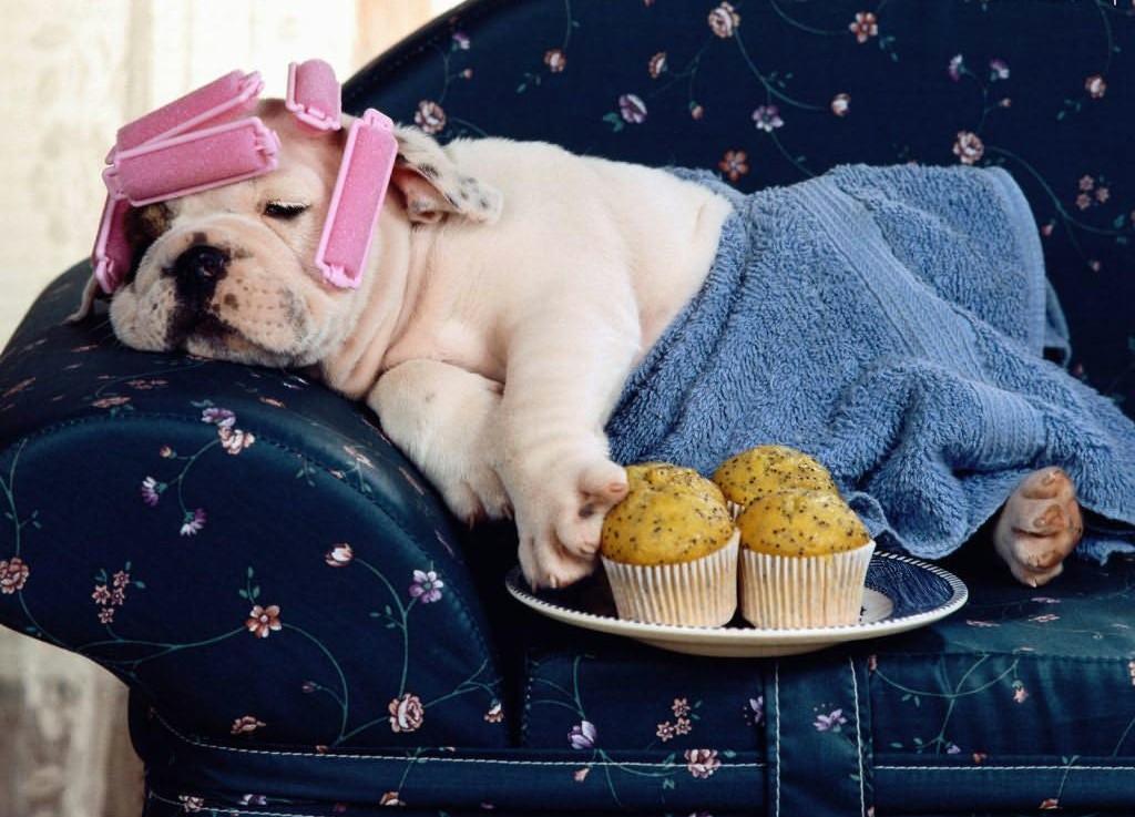 Laziness Leads To Happiness - MashupCorner