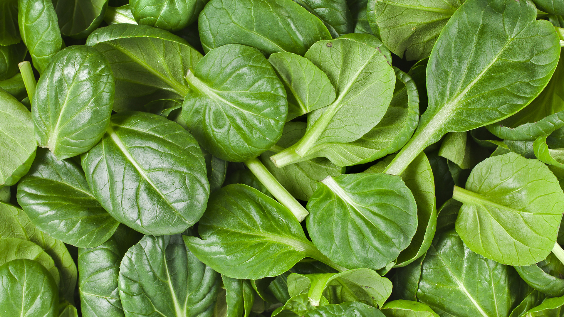 spinach - not get fat while eating full